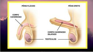 vitamia-para-disfuncao-eretil